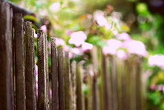 happy fence friday! ({katesea}) Tags: wood flowers colour fence spring dof bokeh may fenced planks 2010 105mm nikkor105mmf28macro nikond40x fencefriday happyfencefriday