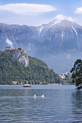 Lake Bled (Shelley & Dave) Tags: lake mountains castle church water birds wildlife swans slovenia bled muteswans glaciallake pletna