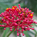 Fiore Ortobotanico-flower botanical garden
