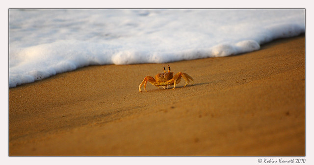 Crab and Surf