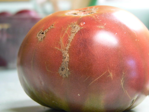 streaky-colored heirloom tomato