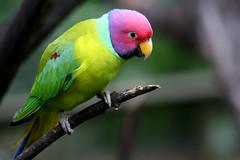 Bird Park KL (Phalinn Ooi) Tags: birds wildlife malaysia kualalumpur klbirdpark tamanburungkl