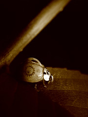 Clockwork Ladybug