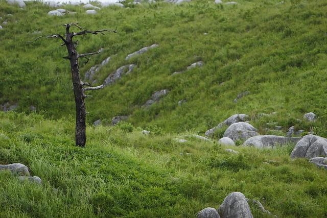 斜面の枯木