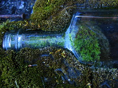 Shelter (rni Valur) Tags: nature moss bottle arctic greenland gras