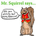 Admonishing Squirrel