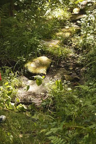 Willoughby Bog Hike (7)