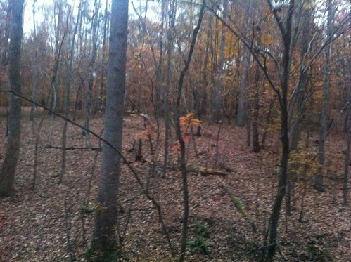 What I see from my deer hunting treestand whitetail deer hunting blog north carolina deer hunting