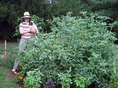 tomato_jungle_6_28_2007_a