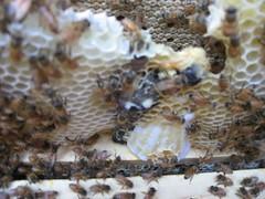 Beekeeping 2432