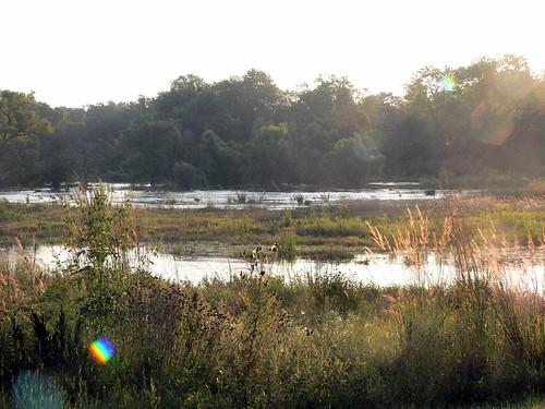 Oak Ridge Forest Preserve