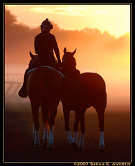 Follow Me (Rock and Racehorses) Tags: morning sunlight ny oklahoma racetrack sunrise bravo saratoga explore thoroughbred contrejour blueribbonwinner nyra horsesatwork mywinners mywinner