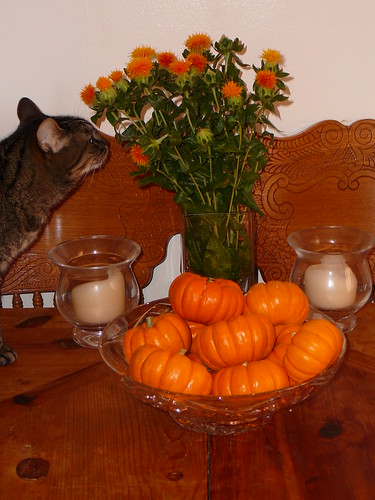 kitty with pumpkins