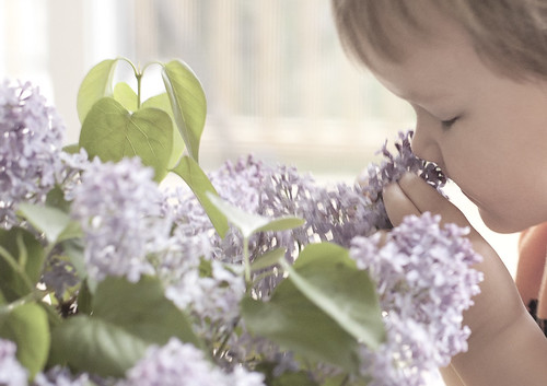 Lucas and the lilacs 2 of 4