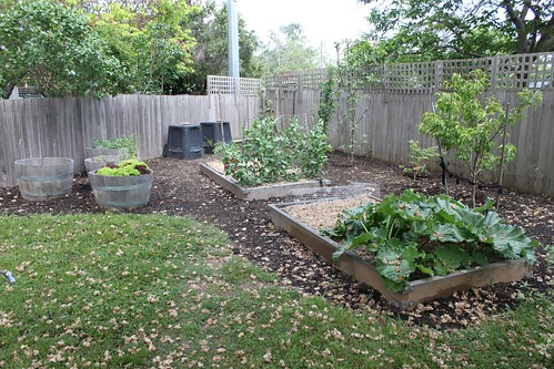 Vegetable patch - Spring 2010