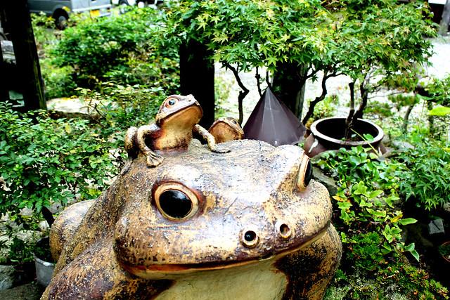 Frog's family