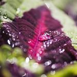 Leaf bokeh thumbnail
