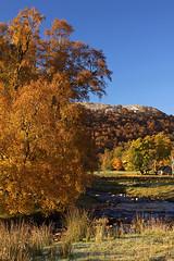 Autumn Bliss (Martin Third) Tags: uk greatbritain autumn trees color colour fall rural river season scotland countryside stream europe britishisles unitedkingdom britain seasonal highland gb laggan riverfindhorn canoneos50d strathdearn