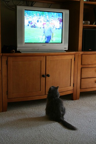 My Cat Likes Golf