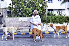 Life continues ... (Humayunn Niaz Ahmed Peerzaada) Tags: old sea india white love dogs senior face model photographer humanity daily stray actor maharashtra mumbai citizen ka naam isi worli generous jeena kutch humayun madai peerzada deolali lifecontinues humayunn peerzaada kudachi kudchi humayoon humayunnnapeerzaada wwwhumayooncom humayunnapeerzaada humayunnnapeezaada