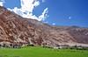 V.I.L.L.A.G.E (Prabhu B Doss) Tags: india mountain nature clouds skyscape landscape nikon village indian sigma dslr 1020mm leh 1020 f8 himalayas jk ladakh prabhu sigma1020mm jammuandkashmir nikonian blueribbonwinner bikeexpedition supershot nikondslr incredibleindia d80 nikonstunninggallery wideangleshot mywinners nikond80 anawesomeshot indianphotographers prabhub manalilehhighway prabhubdoss ncredibleindia welcometoindia ladakhscapes sumdotoleh ladakhivillage bcmtouringcom prabhuboomibalagadoss zerommphotography 0mmphotography