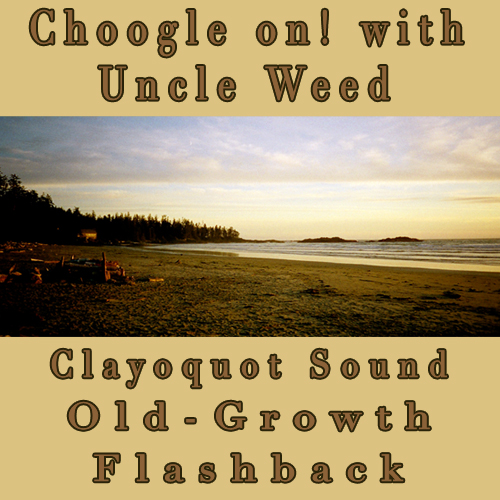 Clayoquot Sound Old-Growth Blockade - Choogle on