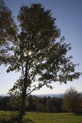 IMG_4437 (crosathorian) Tags: herbst natur september wald indiansummer bayerischerwald laubbume laubbaeme