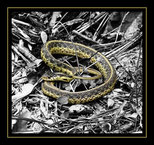 Day 115 - Snake