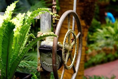 fern wheel