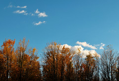 Fluffy Clouds And Autumn Leaves (michaelnpatterson) Tags: autumn trees white color fall leaves clouds mi top michigan fluffy