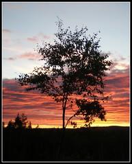 Brushjden (sveatroll [very busy @ the moment]) Tags: sunset summer forest sonnenuntergang sweden sommer schweden sverige wald 2010 sommar vrmland skogen scherenschnitt