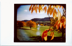 Instant fall colors 3 (schoeband) Tags: fallleaves fall film leaves schweiz switzerland lomography suisse lomolca instant svizzera aargau cherrytree fujiinstaxmini gipfoberfrick panpola instantback chriesiwg