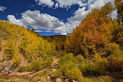 Autumn's Headwaters (Fort Photo) Tags: autumn color fall nature yellow clouds creek forest landscape gold vanishingpoint nikon colorado stream path co aspen depth 67 cloudscape pathway teller 2010 converginglines pikespeaknationalforest highway67 nikon1735 d700