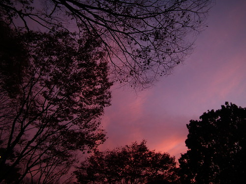 Twilight sky, bordered with lacy branches
