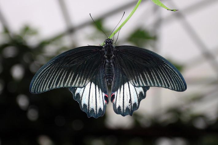 110710_butterfly04