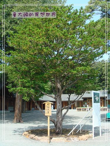 昭和天皇種的樹