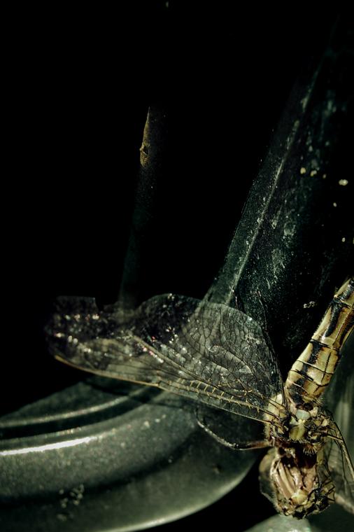 pour une histoire de libellule morte