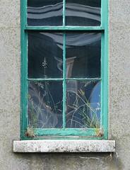 Reversal (adraskoy) Tags: distortion plant canada reflection building abandoned window grass newfoundland stjohns august penninsula avalon 2007 stjohn´s avalonpenninsula