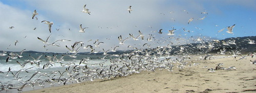 Hundreds of seagulls taking off from a beach.