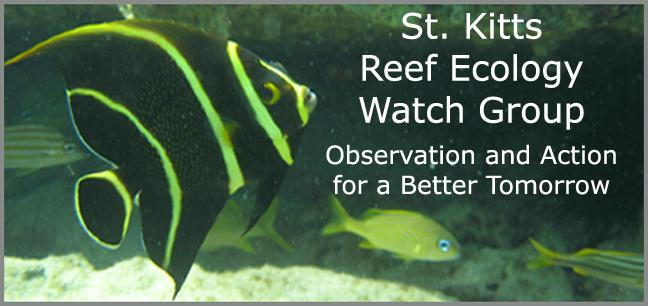 St. Kitts Reef Ecology Watchgroup