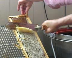 Beekeeping 2659