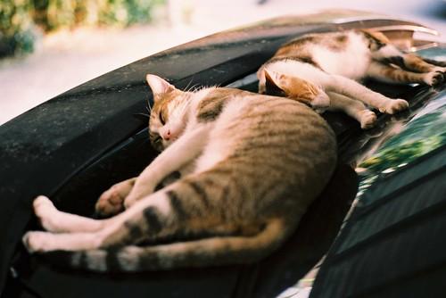 [フリー画像] 動物, 哺乳類, ネコ科, 猫・ネコ, 寝顔・寝ている, 201007081100