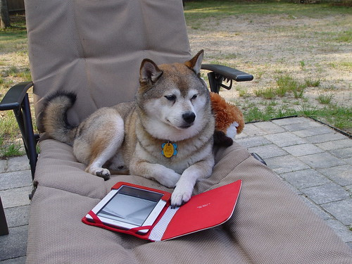 Wolf, reading my Nook