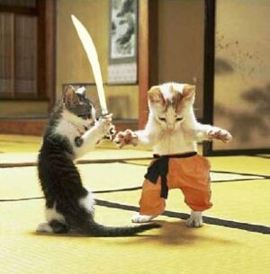 cat fight!!