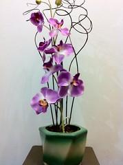 IMG_0355 (Nando Arruda) Tags: flores plantas artesanato rosas decorao vasos arranjos