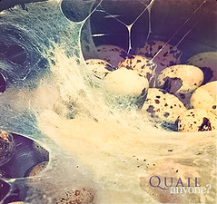 bubbling quail eggs (j e s s i c a ♥ -) Tags: hot water spider juicy post sticky cook bubbles spot foam bubble eggs spotted cooked boiled liquid processed app webs edit quail boil iphone iluviphone instagram