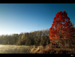 basking in the morning sun (dK.i photography (counting down)) Tags: morning autumn light red sun mist color tree crimson canon maryland 7d davidsonville thegalaxy dki tokinaaf1116mmf28 mygearandme mygearandmepremium mygearandmebronze mygearandmesilver mygearandmegold mygearandmeplatinum mygearandmediamond