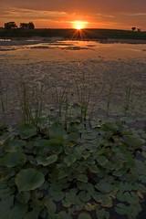 Last Light on the Pads (baldwinm16) Tags: sunset illinois forrest prairie preserve springbrook springbrookprairie