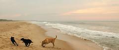 beach morning-