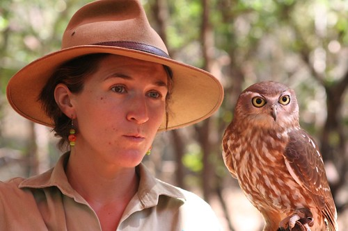 Barking Owl with guide
